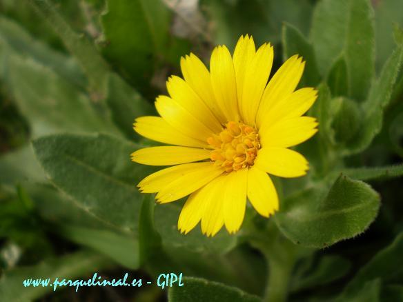 Primavera En El Parque Lineal Los Campos De Flores Amarillas
