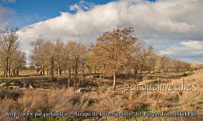 árboles canal manzanares